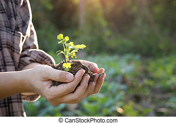 Nurturing baby plant on hand agriculture. - Soil cultivated...