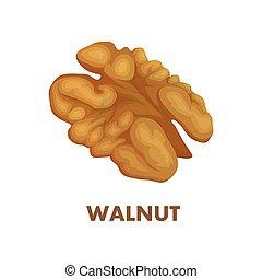 Walnut - Nut food. Walnut isolated on white background. ...