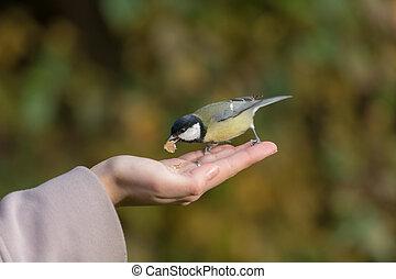 nut in its beak
