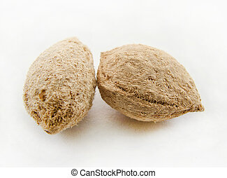 Nut Isoleted On White Background