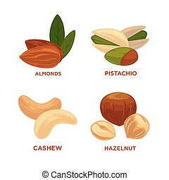 Nut set. Ripe nuts and seeds vector illustration. Various ...
