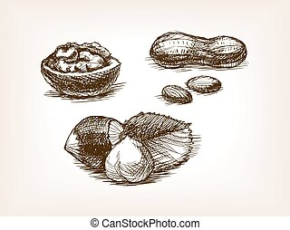 Nut sketch style vector illustration