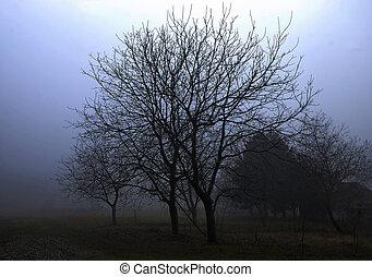 Nut trees in field on fogy