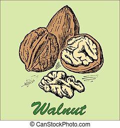 nut walnut