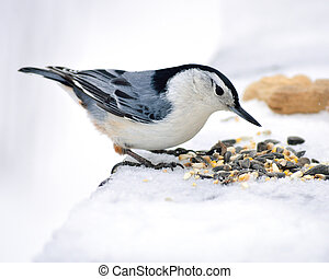 A nuthatch perched on a post with bird seed.