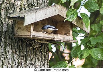 Nuthatch on a bird feeder
