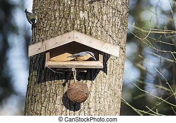 Nuthatch on a birdfeeder - Birdfeeder and nuthatch