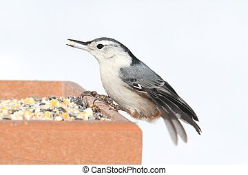 Nuthatch On A Feeder