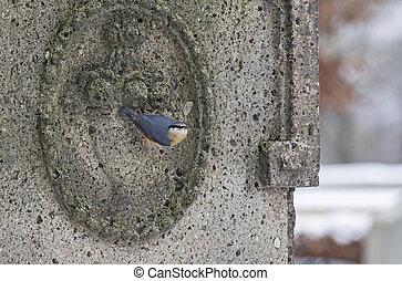 Nuthatch on a stone