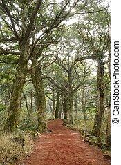 Nutmeg Forest park in Jeju Island