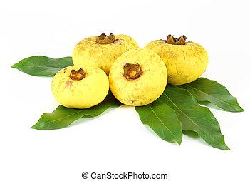 Nutmeg Myristica fragrans Houtt