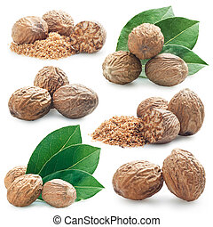 nutmeg - collection of photos of nutmeg on a white...