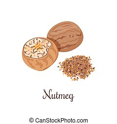 Nutmeg vector illustration. crushed spices