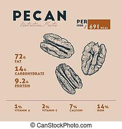 Nutririon fact of pecan sketch hand drawing. nut pecan...