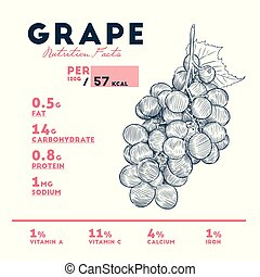 Nutrition facts of grape, hand draw sketch vector.