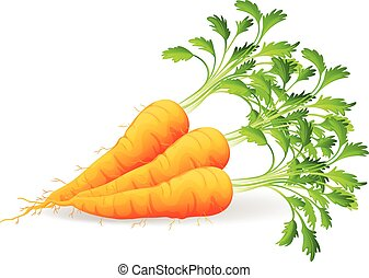Nutritious carrots on a white background