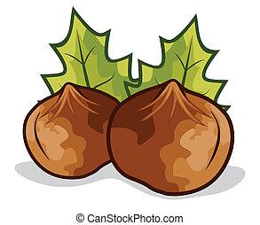 Nuts filberts - hazelnut