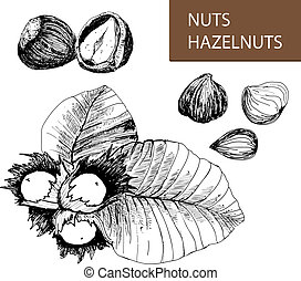Nuts. Hazelnuts. Set of hand drawn illustrations.