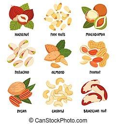 Nuts illustration set
