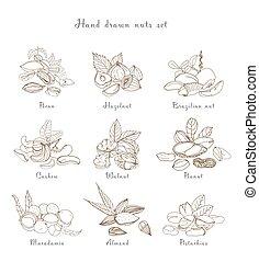 Nuts set, different kinds. Collection with almond, macadamia, pistachio, walnut, cashew, peanut, brazilian, pecan. Contour hand drawn illustration.