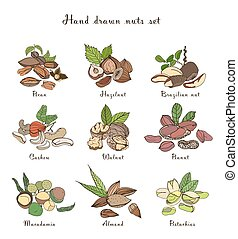 Nuts set, different kinds. Collection with almond, macadamia, pistachio, walnut, cashew, peanut, brazilian, pecan. Colorful hand drawn illustration.