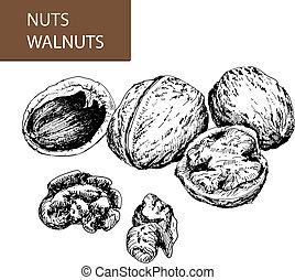 nuts., walnuts.