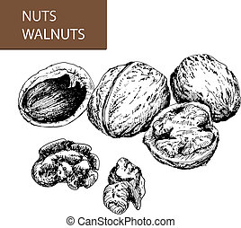 Nuts. Walnuts.