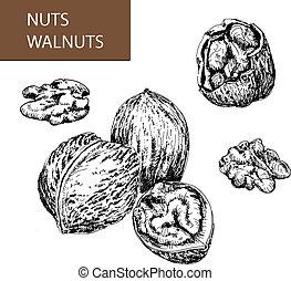 Nuts. Walnuts.
