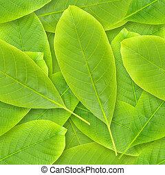 nutwood, leafs, seamless, バックグラウンド。