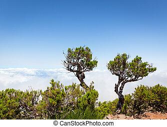 nuvens, árvores, acima
