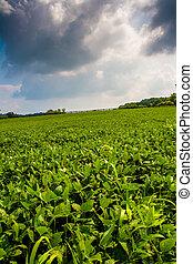 nuvens, sobre, fazenda, campos, em, rural, york, município, pennsylvania.