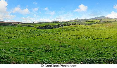 nuvens, sobre, prado verde