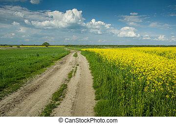nuvens, sujeira, céu, campo amarelo, rapeseed, estrada