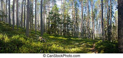 nyár, erdő