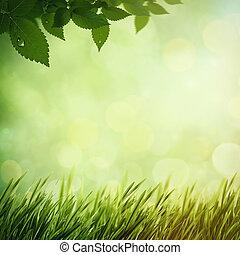 nyár, erdő, természetes, háttér, reggel