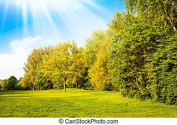 nyár, fa., fű, mező, zöld parkosít