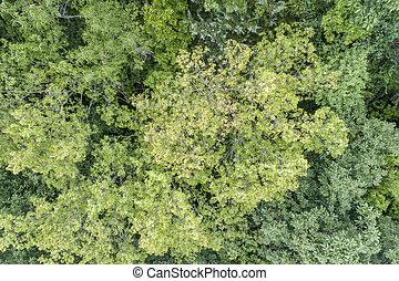 nyár, felülnézet, közül, zöld erdő