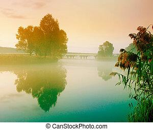 nyár, folyó parkosít