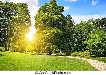 nyár, liget, noha, gyönyörű, zöld, pázsit