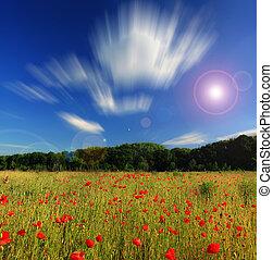 nyár, mák, nap, mező