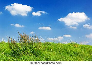 nyár, meadow.