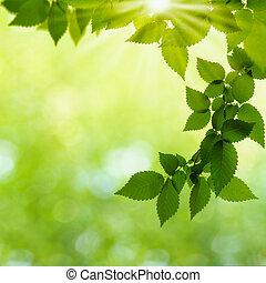 nyár nap, alatt, a, erdő, elvont, természetes, háttér