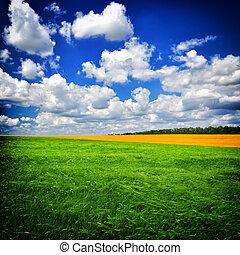 nyár nap, képben látható, a, zöld terep