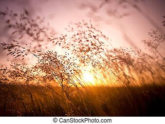 nyár, száraz, fű