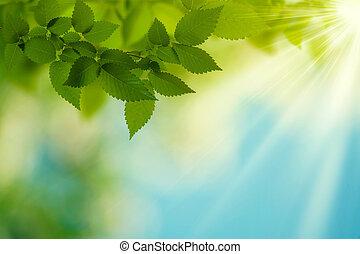 nyár, szépség, elvont, háttér, day., környezeti, tervezés, -e