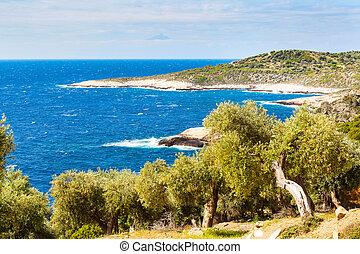 nyár szünidő, háttér, noha, greek sziget, thasos, olajbogyó, bitófák, és, tenger, görögország