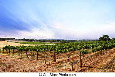 nyár, szürkület, szőlőskert