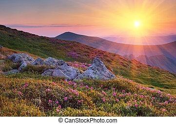 nyár, táj, alatt, hegyek, noha, a, sun.