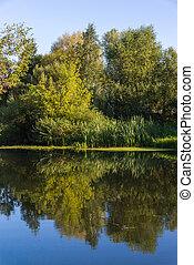 nyár, táj, noha, folyó, alatt, központi, oroszország