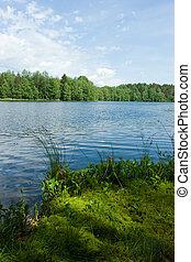 nyár, tó erdő